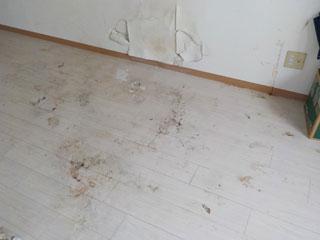 床清掃のビフォア