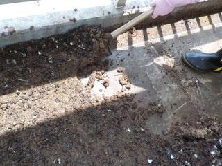 鳩糞の撤去風景