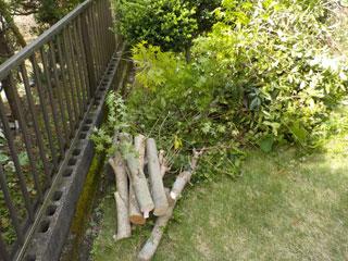 庭のビフォア